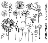Hand Drawn Wild Herbs And...