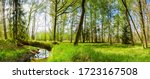 Green Forest Landscape With...