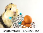 A Guinea Pig And A Shopping...