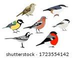 Set Of Birds  Sparrow ...