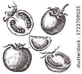 tomato. hand drawn set. vector...   Shutterstock .eps vector #1723709035