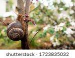 A Snail Crawls On A Tree. A...