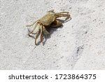 A Large Crab On A White Sandy...