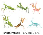 Set of praying mantis. Сollection of colorful mantis in various poses. Set of standing insects. Large predator mantis. Colorful illustration of insect on a white background.