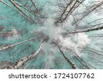 Photo From Below High Birch...