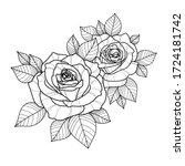 hand drawing roses flower for... | Shutterstock .eps vector #1724181742