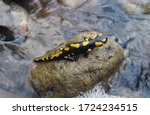 A Black And Yellow Spotted...