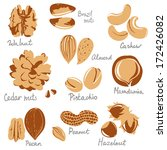 almond,art,brown,cashew,crops,design,drawing,eating,element,food,freshness,fruit,group,hazel,hazelnut