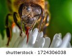 Worker Bee Collecting Nectar...