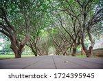 Tree Tunnel At Nan Thailand