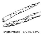 hand drawn ink vector drawing.... | Shutterstock .eps vector #1724571592