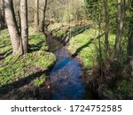 Winding Forest Brook  Blue...