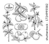 vector sketch citrus fruit... | Shutterstock .eps vector #1724995582