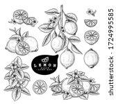 vector sketch citrus fruit... | Shutterstock .eps vector #1724995585