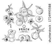 vector sketch peach decorative... | Shutterstock .eps vector #1724995588