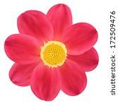 Red Dahlia Flower. Vector...