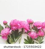 top view of peony flower border ...   Shutterstock . vector #1725503422