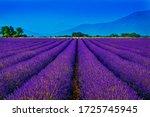 Lavander Field South Of France