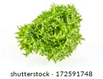 fresh green iceberg salad... | Shutterstock . vector #172591748