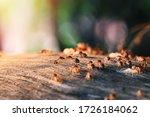 Colony of termite  termites eat ...