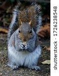 Squirrel Eating Peanut....