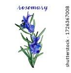 Watercolor Rosemary...
