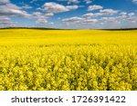 Field Of Beautiful Springtime...