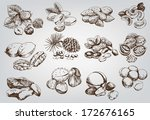 hazelnuts. set of vector... | Shutterstock .eps vector #172676165