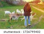 A Girl Tending A Herd Of Goats...