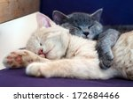 Stock photo kittens sleeping together 172684466