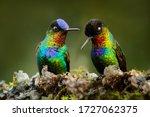 Pair of glossy shiny tinny bird....