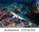 endangered hawksbill sea turtle ... | Shutterstock . vector #172732202