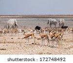 Many Animals At Waterhole ...
