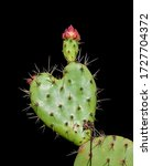Heart Shaped Prickly Pear...