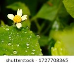 Raindrops On A Flower On A...