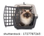 Birman Cat And Cage In Front Of ...
