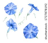 Watercolor Blue Morning Glory...