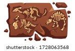Dinosaur Fossil Bones  Dino...