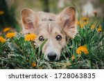 A Mixed Breed Dog Laying On The ...