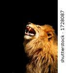 Roaring Lion Vertical...