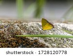 A Small Yellow Butterfly...