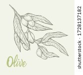 olive branches isolated on... | Shutterstock .eps vector #1728137182