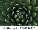 Fractal Cactus Energy Peaceful...