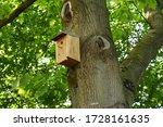 Bird House On Tree In Summer.