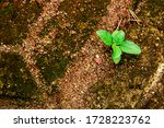 A Small Plant That Survives In...
