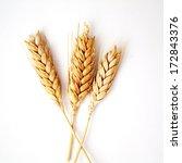 wheat ears on white background  | Shutterstock . vector #172843376