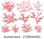 Set Of Red Coral Seaweeds...