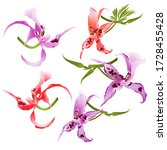 purple and red orchids... | Shutterstock .eps vector #1728455428