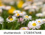 Honey Bee Springtime Scene...