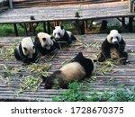 Enjoying The Fresh Cut Bamboo...